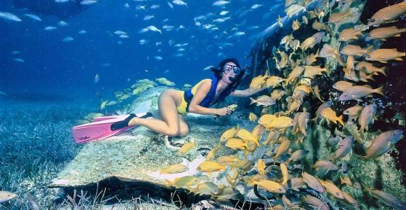snorkeling_egypt_bikini_fish