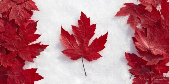 Canada flag red maple leaves