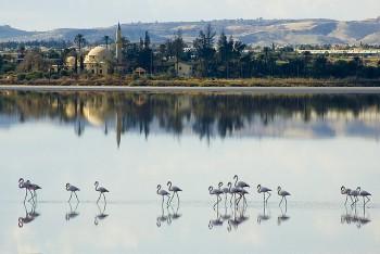 Фламинго у Ларнаки