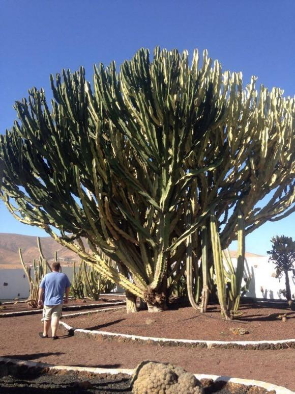 Canary Islands — (1)
