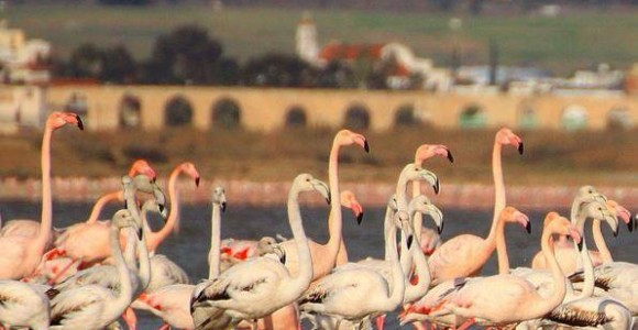 Larnaca Solt Lake flamingoes aqueduct - photo by Maria Nicolaidou