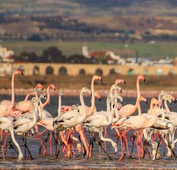 Larnaca Solt Lake flamingoes aqueduct - photo by Maria Nicolaidou