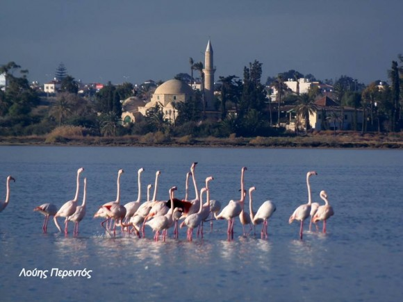 Larnaca Solt Lake flamingoes mosque - photo by Louis Perentos