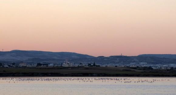 Larnaca Solt Lake flamingoes - walk around (55)