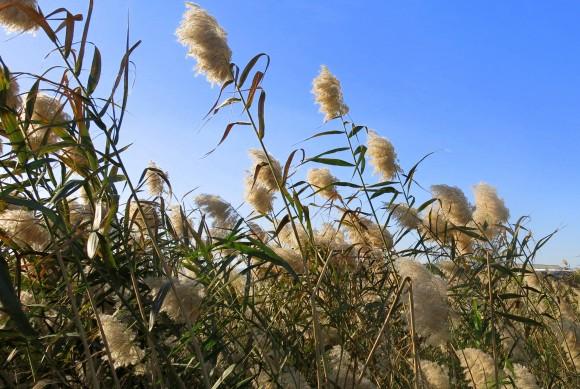 Larnaca Solt Lake - walk around (10)