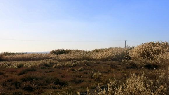 Larnaca Solt Lake - walk around (12)