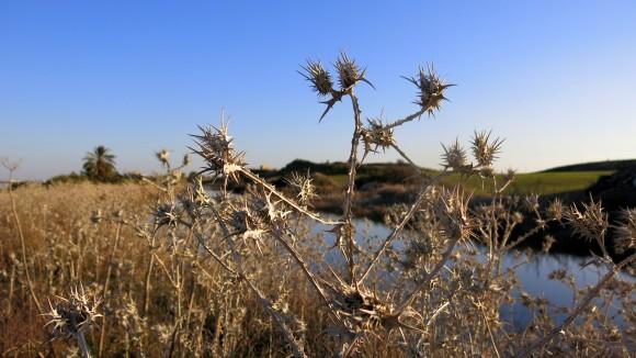 Larnaca Solt Lake - walk around (27)