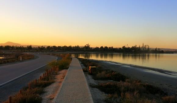 Larnaca Solt Lake - walk around (50)