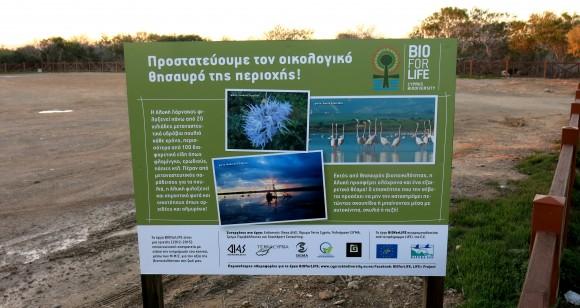 Larnaca Solt Lake - walk around (51)