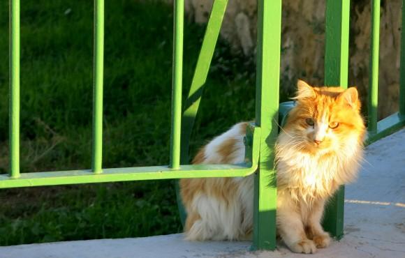Larnaca Solt Lake - walk around - mosque Tekke cats (1)