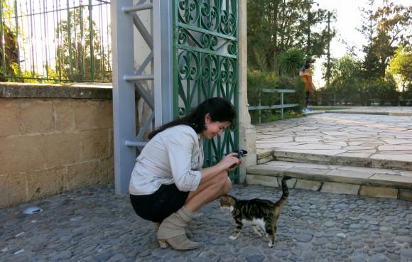 Larnaca Solt Lake - walk around - mosque Tekke cats (2)