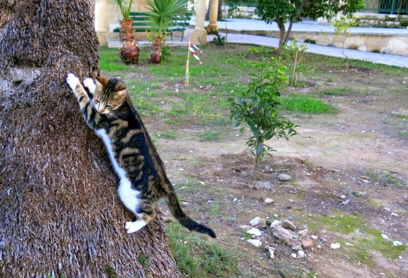 Larnaca Solt Lake - walk around - mosque Tekke cats (3)
